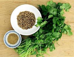 Семена кориандра (кинза)