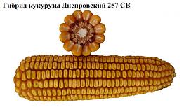 Семена кукурузы  Дніпровскій 257 СВ.