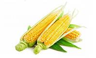 Семена кукурузы  Кремень 200 МВ F1