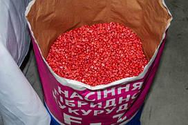 Семена кукурузы  Оржица 237 МВ F1