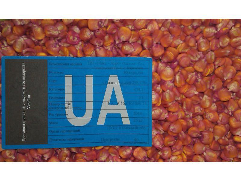 Семена кукурузы  Солонянський 298 СВ