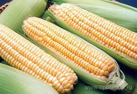 Семена кукурузы  Хмельницкий.