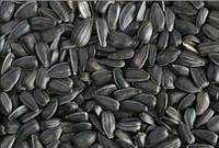 Семена подсолнечника Аламо ( Стандарт ASP)