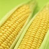Семена кукурузы НС - 400