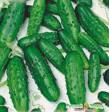 Семена на вес Огурец Ира F1