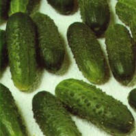 Весовые семена Огурца  Парус F1