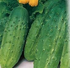 Весовые семена Огурца  Аладин F1