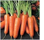 Семена моркови Флора