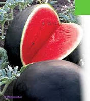 Семена арбуза Красень ( весовые от производителя)