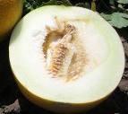 Семена оптом дыня Престиж от производителя.