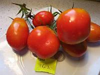 Семена томатов Фрода F1