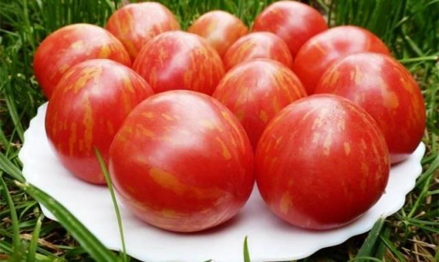Семена томатов Гном