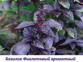 """Семена Базилик """"Фиолетовый"""""""