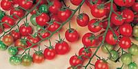 Семена томатов Сладкий миллион