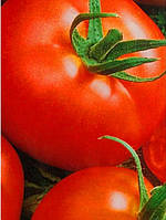 Семена томатов «Альфа»