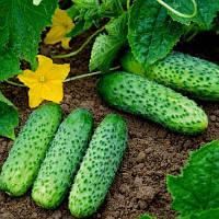 Семена огурцов Карат f1