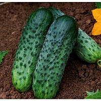 Семена огурцов Октопус f1