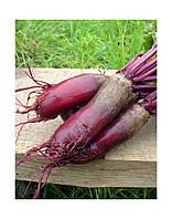 Семена столовой свеклы Карилон
