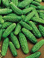 Семена огурцов Парижский корнишон