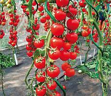 Семена Томата Черри высокорослые