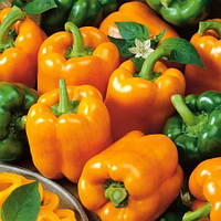 Семена перца Оранжевое чудо