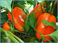 Семена перца Гурме