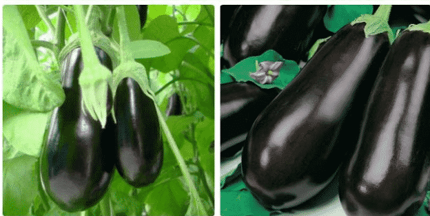 Семена баклажан Фиолетовое чудо