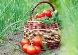Семена овощей и зелени (весовые,оптом )