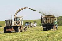 Таможенные услуги экспорта товаров, экспорт сельхозпродукции