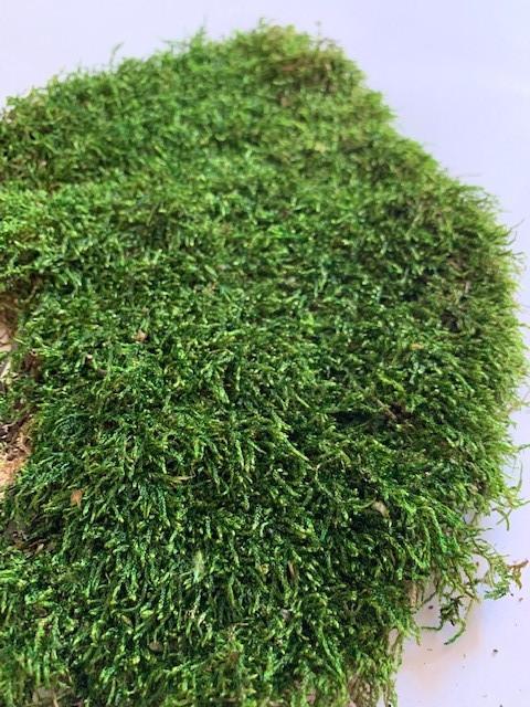 Декоративный мох плоский 200 грамм. зелёный