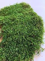 Декоративный мох плоский 200 грамм. зелёный, фото 1