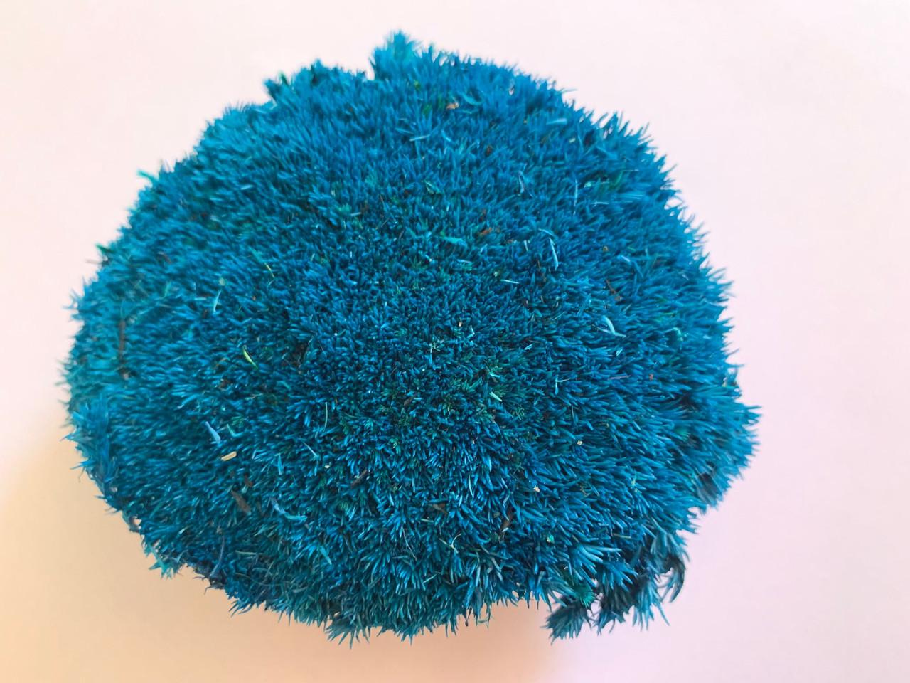 Стабилизированых мох кочки синий 500 грамм.