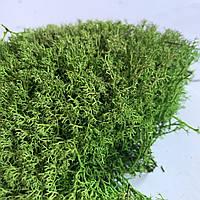 Стабилизированный мох ягель светлый  500 грамм