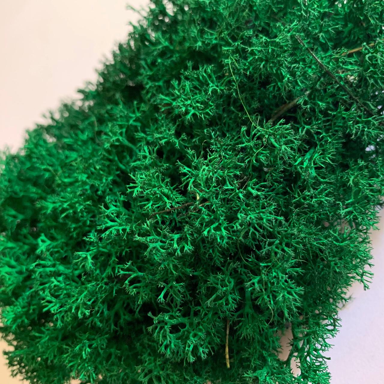 Стабілізований мох Green Ecco Лишайник ягель український темно-зелена 1 кг