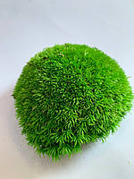 Стабилизированный мох кочки светлые 500 грам