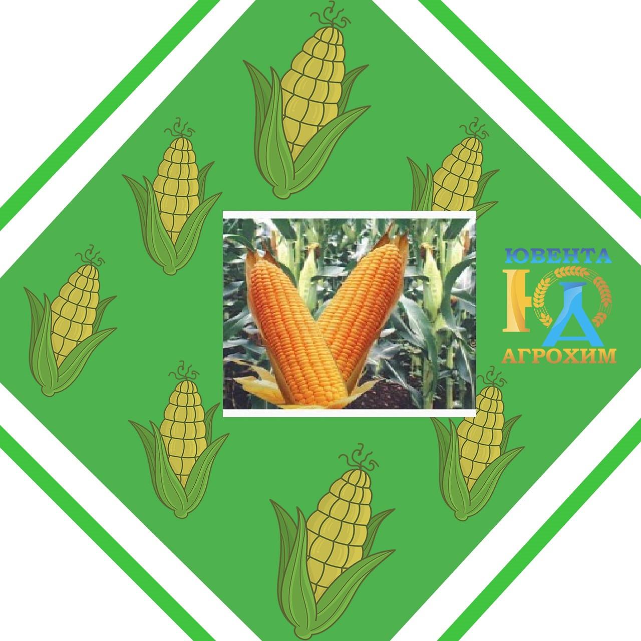 Семена кукурузы AS 33017
