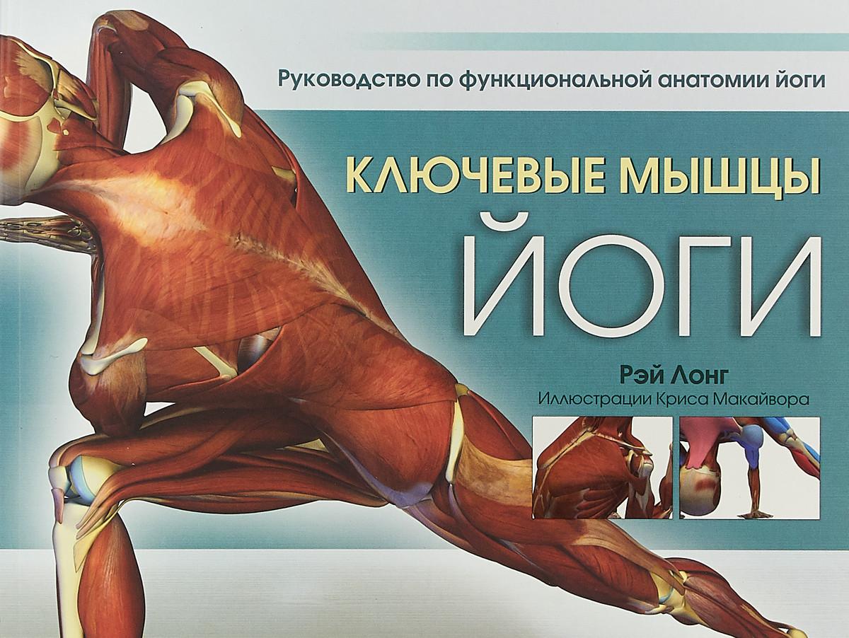 Ключевые мышцы йоги.  Лонг Рэй
