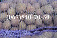 Картофель семенной оптом