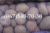 Семенной картофель СЕРПАНОК. ЭЛИТА