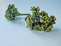 Дрібноцвіт оливковий
