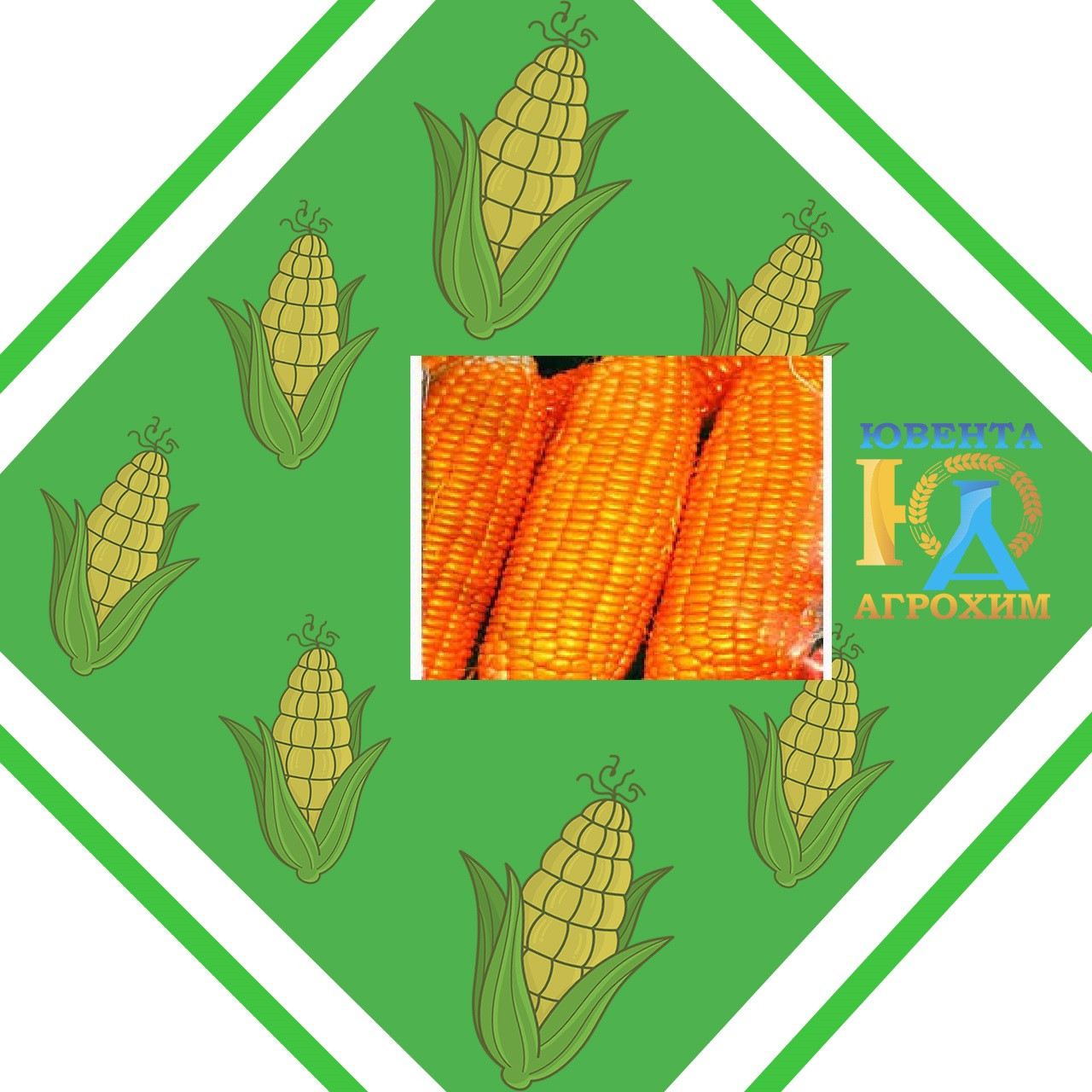Семена кукурузы AS 34002 New