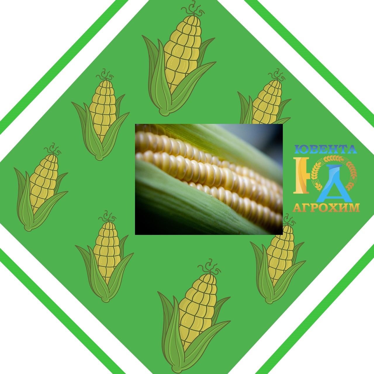 Семена кукурузы Даниил