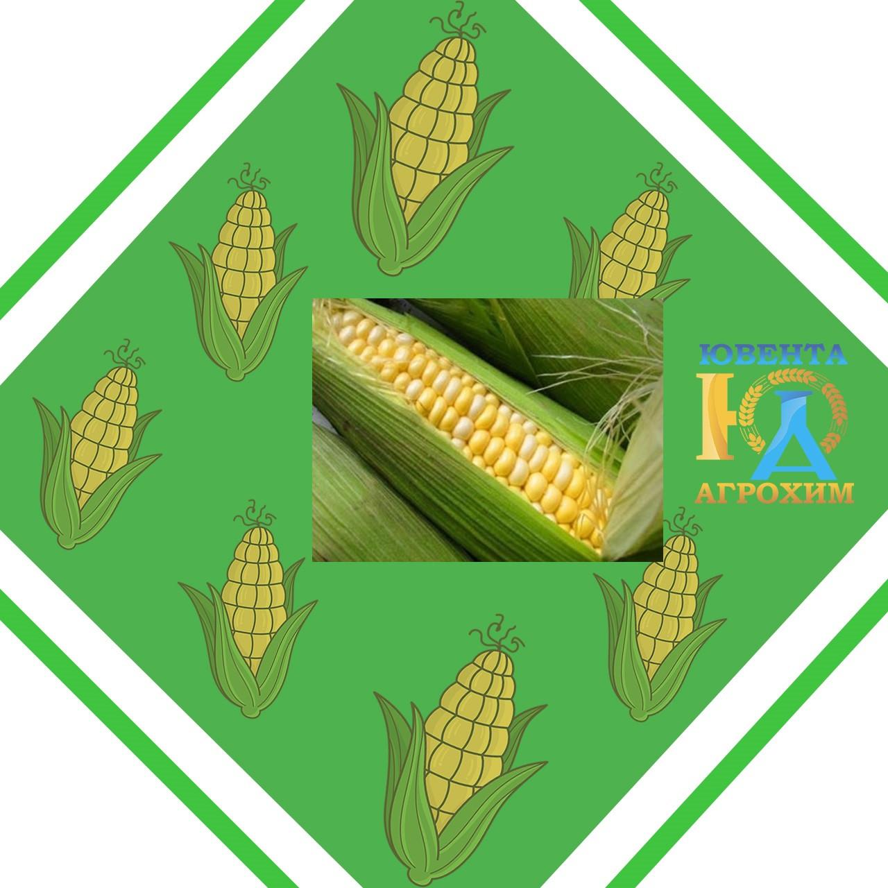 Семена кукурузы  PR38N86