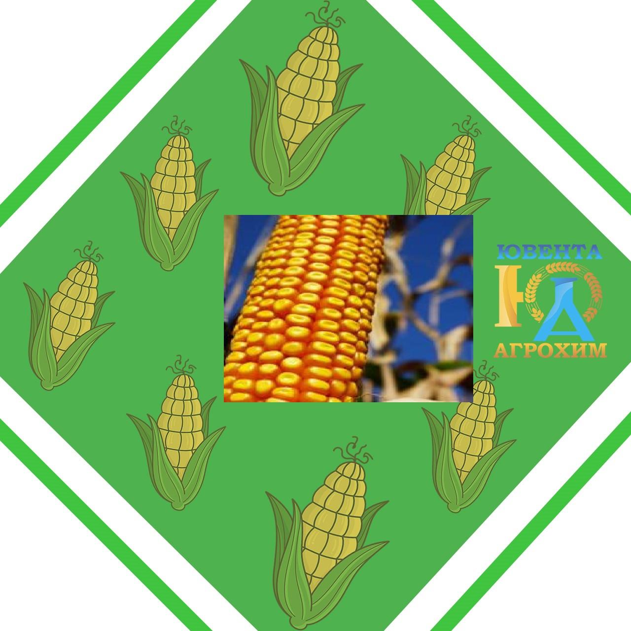 Семена кукурузы  PR38А79