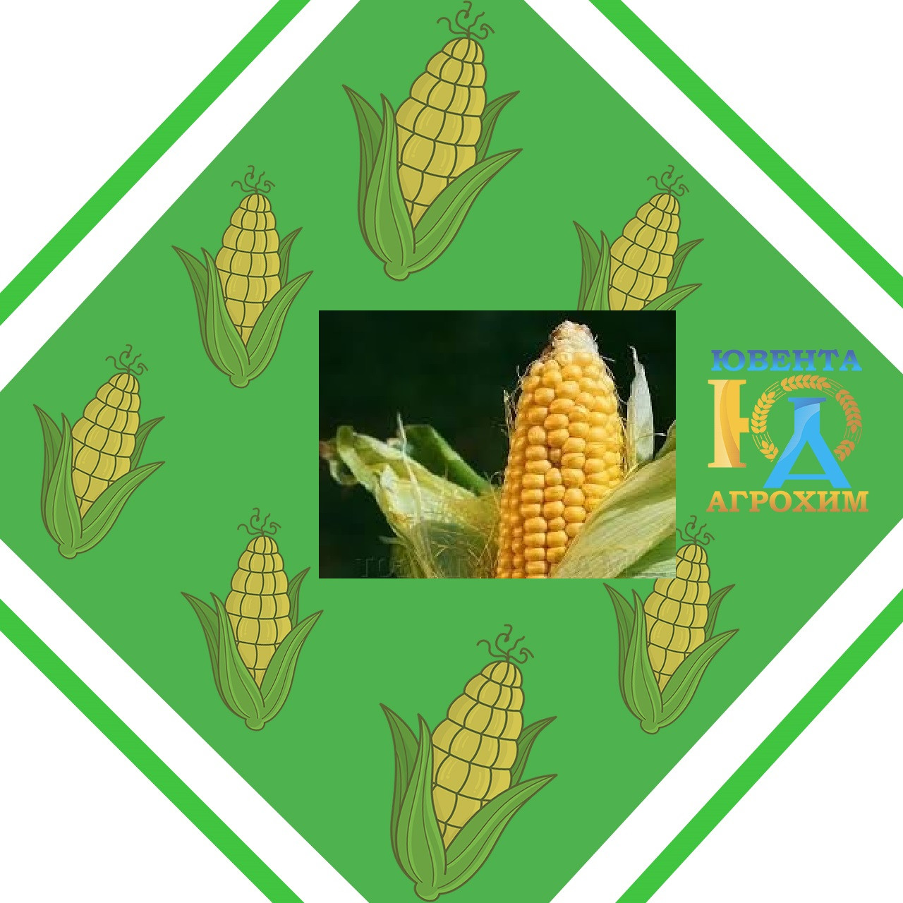 Семена кукурузы Р 9175 AQUAmax (ФАО 330)