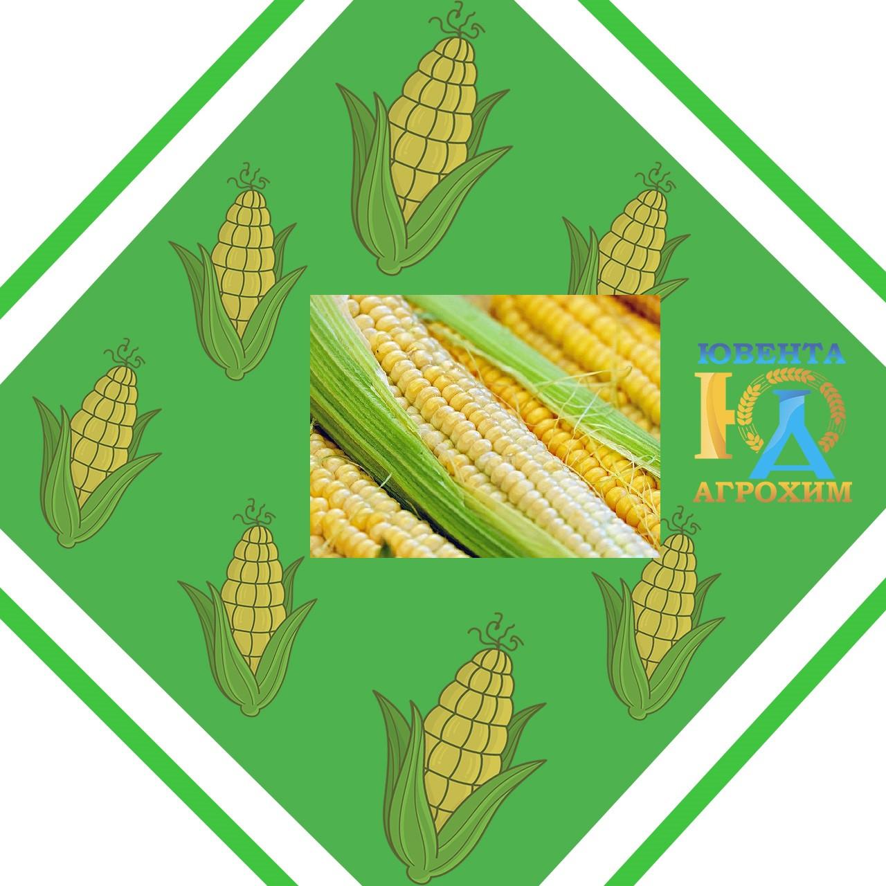 Семена кукурузы Р8025