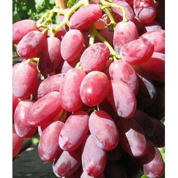 Виноград Марсело