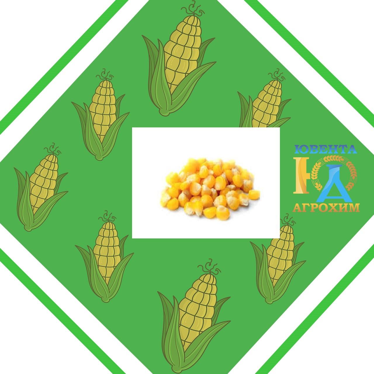 Семена кукурузы Канада