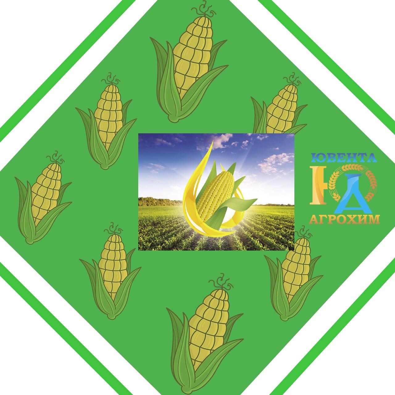 Семена кукурузы НК Некта