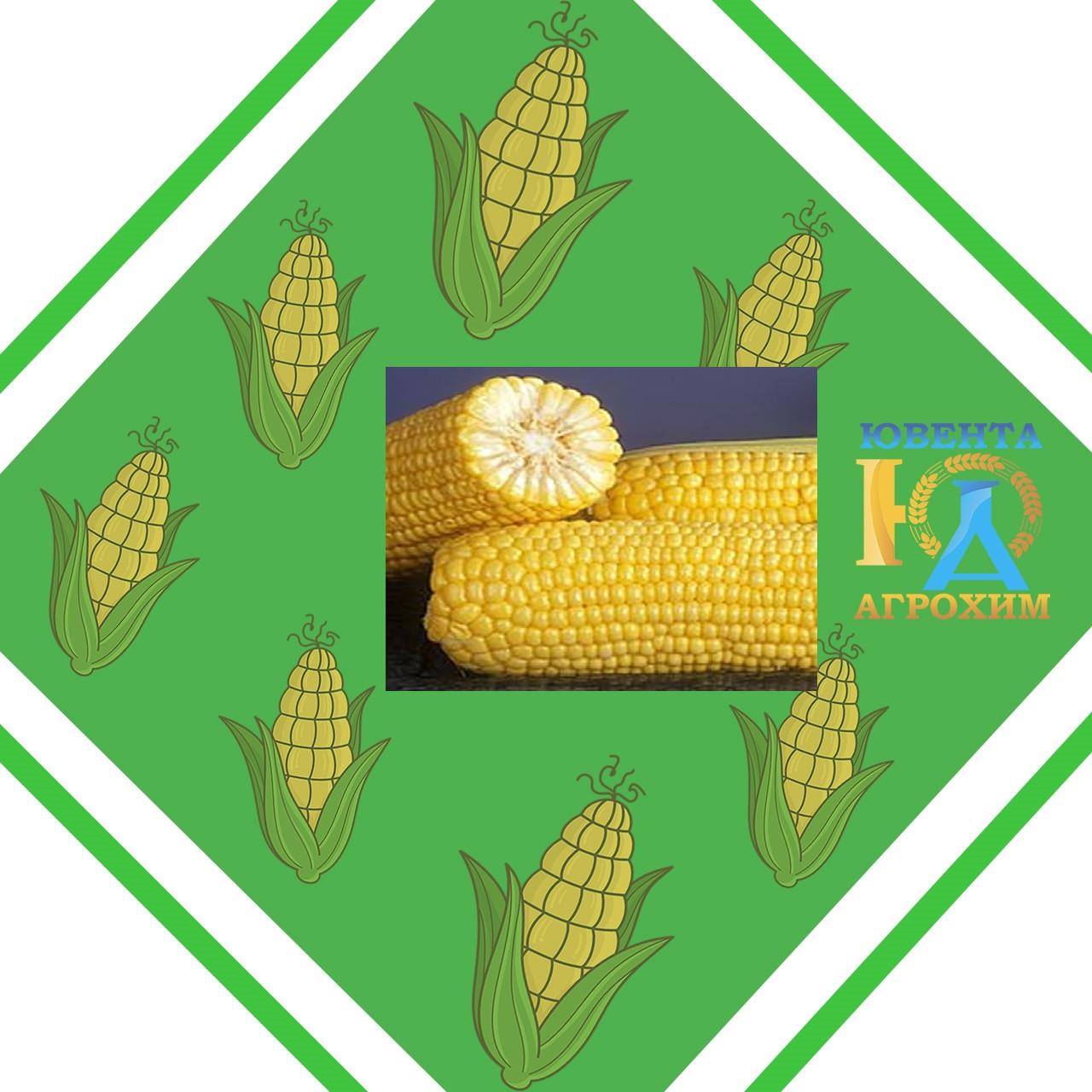 Семена кукурузы НК Симба